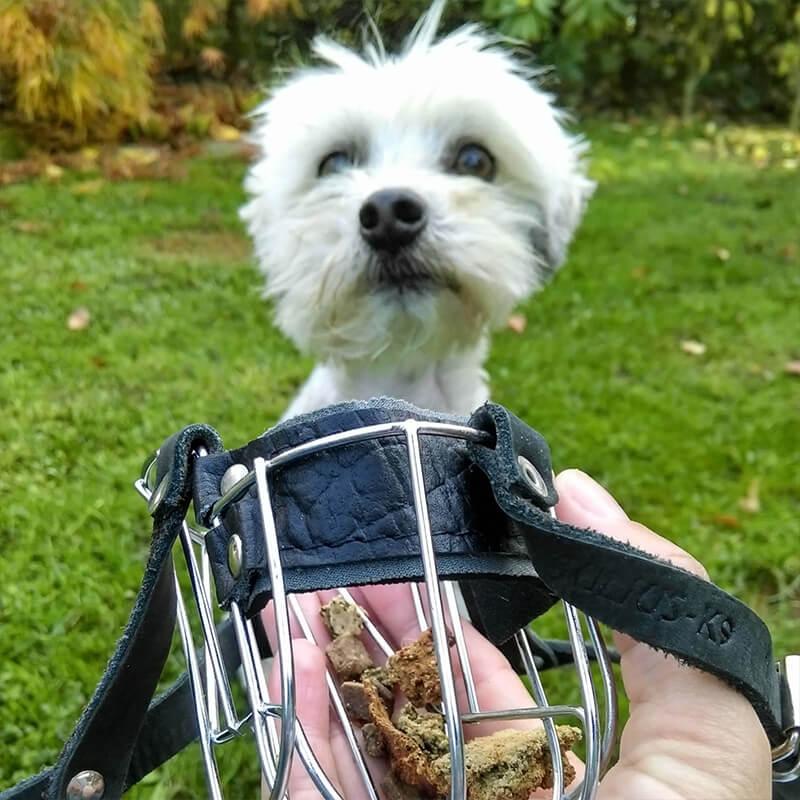 StresslessDogs Hund wird trainiert mit Leckerlis