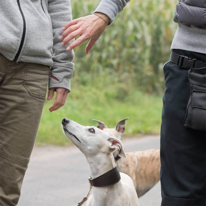 StresslessDogs Hundetrainer
